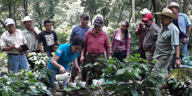 Más de 5,400 productores de café han sido capacitados.