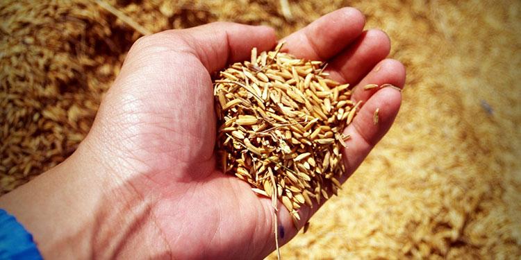 Las importaciones profundizarán el déficit comercial, pero permitirán mantener controlado el precio del arroz este año, según expertos.