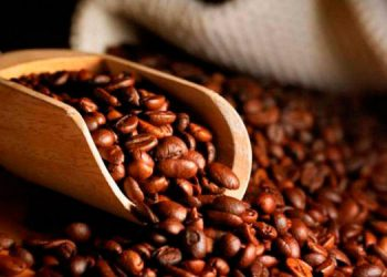 La presente cosecha de café ya dejó 409.9 millones de dólares en divisas.