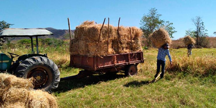 Los técnicos de la SAG/Dicta darán asesoramiento a los ganaderos.