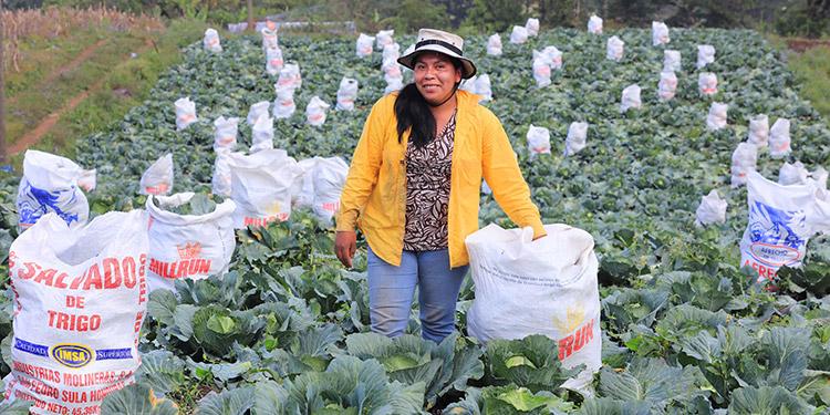 Productores agrícolas llevan dinero a sus bolsillos supliendo mercados del norte, centro y sur del país.