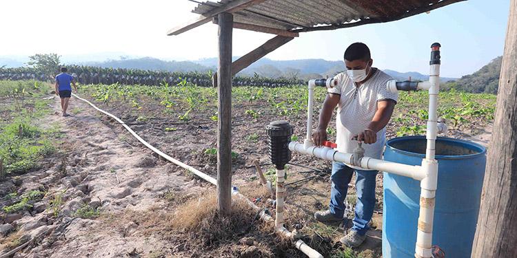 Los labriegos han reactivado sistema de riego por goteo financiado por el gobierno del Presidente Juan Orlando Hernández y Usaid.
