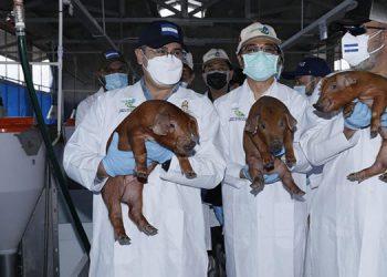 La genética de los animales garantiza alta rentabilidad.