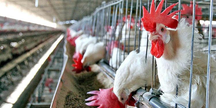 Con esta actividad se pretende crear conciencia en los avicultores de la importancia y manejo de las medidas de bioseguridad.