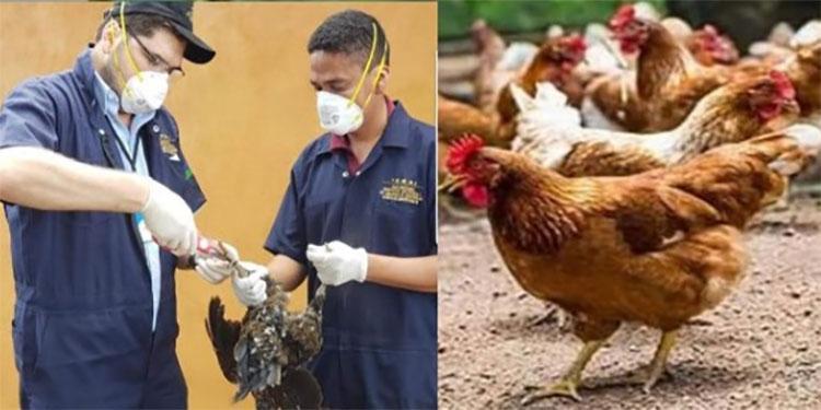 La iniciativa impulsa el sector avícola y refuerza los conocimientos del personal técnico que trabaja en granjas a nivel de laboratorios.