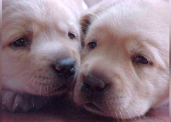 El extraño caso de un perro que nació con un solo ojo, 2 lenguas y sin nariz
