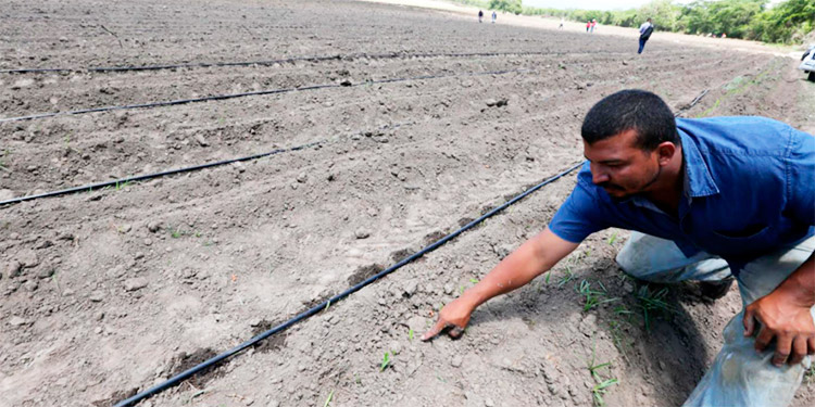Invierten más de L10 mil millones para la reactivación del agro y seguridad alimentaria