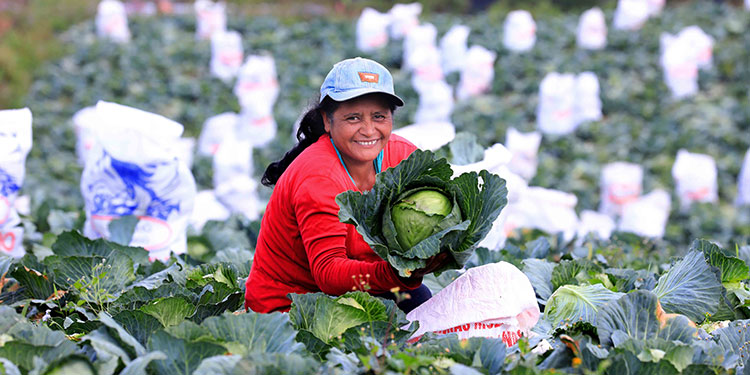 Gracias a las buenas prácticas implementadas por el gobierno, Honduras es un referente regional en fortalecimiento del agro.