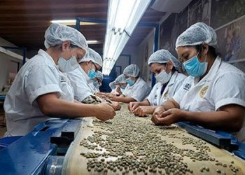 El grano aromático representa para Honduras más del 5% del PIB y cerca del 30% del PIB agrícola, según cifras oficiales.