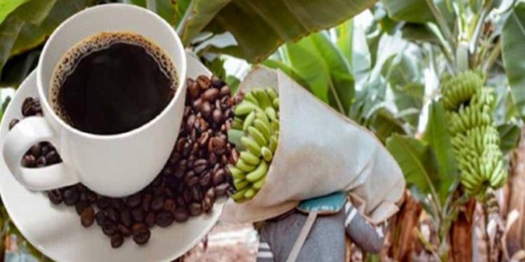 Los ingresos de divisas por ventas de café crecieron en 34.2% en dos meses, sin embargo, las entradas por envíos de banano cayeron en -23.9%.