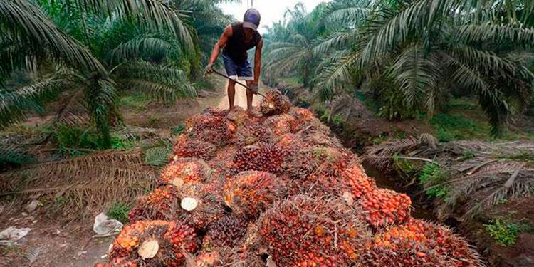 Las exportaciones de aceite de palma fueron impulsadas por incremento en el precio promedio internacional.