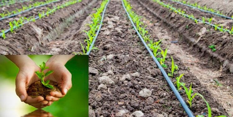 El sector azucarero destaca por sus efectivos procesos en la preservación del agua y en la protección de áreas protegidas y reforestación de bosques.