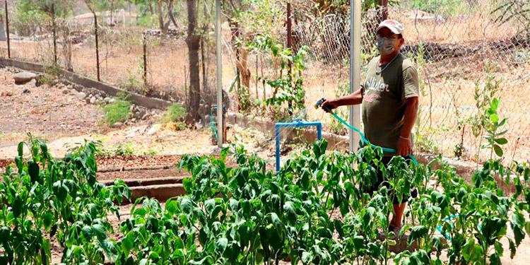 Cooperantes japoneses y representantes de AMDA en Honduras observaron la ejecución de proyectos en la comunidad de Vado Ancho, en el departamento de El Paraíso.