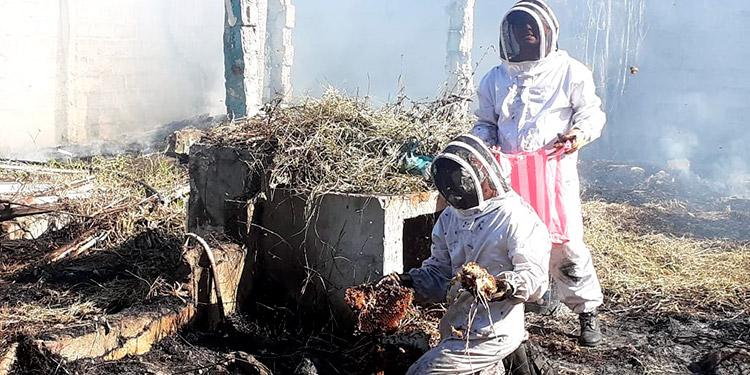Los bomberos controlaron el enjambre de abejas que afectó a varias personas en el barrio San Miguel.