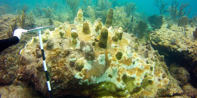 De buzos a científicos voluntarios para proteger los corales