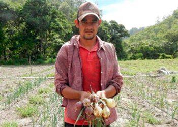 Sistema de extensión agrícola benefició a más 17 mil hogares