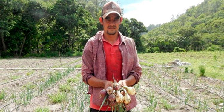 La productividad agrícola fue favorecida con el proyecto.