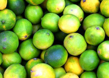 """René Bendaña: """"incremento del precio del limón se debe a las tormentas tropicales"""""""
