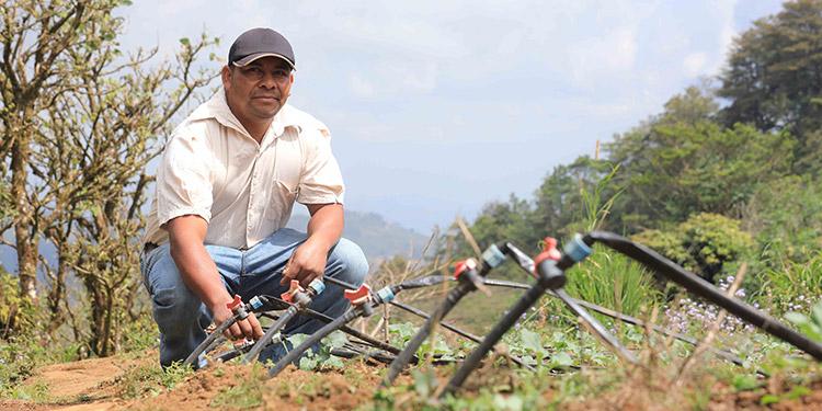 Solo en el Corredor Seco son más de 3,000 hectáreas bajo riego por goteo, lo que permite cosechar durante todo el año.