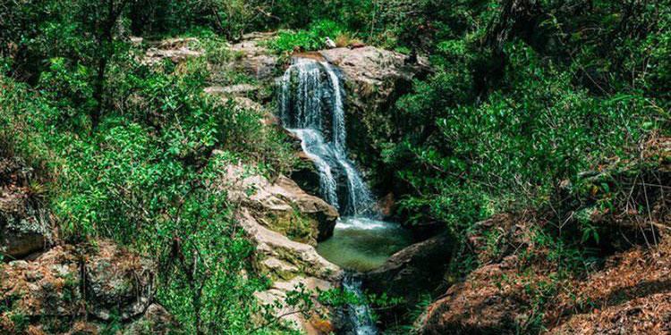 Sin necesidad de viajar al interior, los capitalinos tienen la oportunidad de disfrutar este asueto en contacto con la naturaleza en los senderos del Parque Nacional La Tigra.