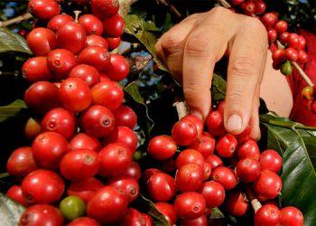 El Programa Centroamericano busca mejorar las condiciones de vida de la población rural en las zonas productoras de café de Centroamérica.