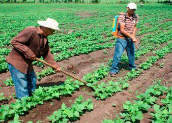 Piden incluir a agricultores en los planes de gobierno