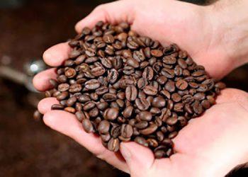 Europa es el destino del 71 por ciento de la producción cafetalera, Alemania el principal importador.
