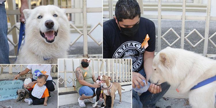 El perro Sky, junto a uno de sus dueños, se presentó ante los juzgados de La Granja, siendo apoyado por capitalinos que llegaron con sus mascotas.