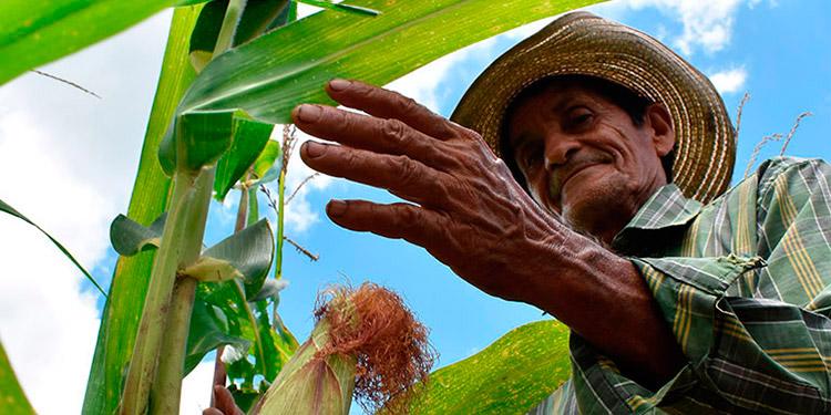 Diferentes sectores productivos han alertado sobre el alto costo de los fertilizantes.