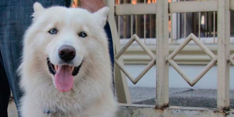 Nuevamente el perro Sky y su familia fueron citados para el 18 de mayo, para el desarrollo de la audiencia de declaración de imputado.