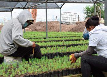 Para el año 2030, el objetivo es haber restaurado un millón de hectáreas de bosque en toda Honduras.