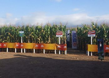 Tecun y BAYER: Realizan reencuentro con productores de maíz