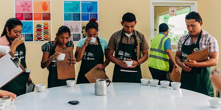 Los jóvenes son capacitados en control de calidad del café y otros temas.