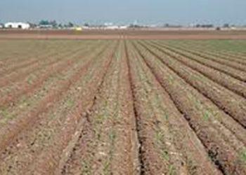 El suelo, cualquiera que sea el cultivo comienza con la limpieza.