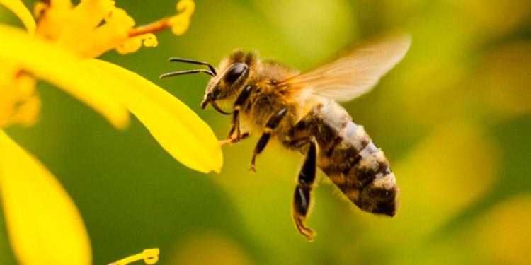 Cuidar las abejas es responsabilidad de todos.