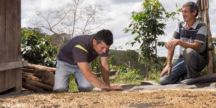 Alrededor de 670 millones de dólares han entrado a la economía por exportaciones de café, de una meta cercana a mil millones de la cosecha 2020-2021.