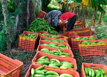 El objetivo de ComRural es contribuir a incrementar la productividad y rentabilidad de 6,318 productores y productoras.