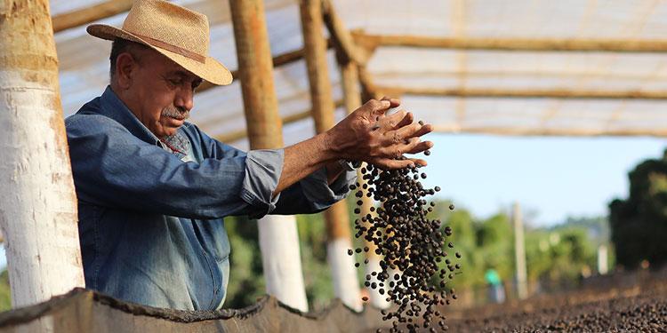 Agobiados por las deudas, los productores de café piden otro compás a la banca, ya que temen que las propiedades entren a remate.