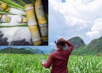 El sector azucarero también beneficia con la generación de 200 mil empleos directos, indirectos y conexos.