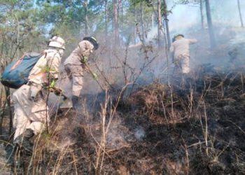 Los incendios en el bosque han contribuido a la degradación de la cobertura forestal en el país, entre otros factores.