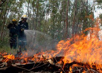 86% han bajado los incendios forestales.