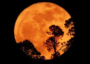 El primer acontecimiento previo al eclipse la Súper Luna de las Flores salió radiante en el horizonte entre un claro de nubarrones de tormenta y adornada por los árboles.