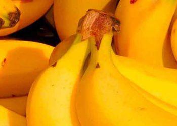 El banano, segundo generador de divisas, después del café, sería desplazado de ese puesto este año por ventas de aceite de palma africana.