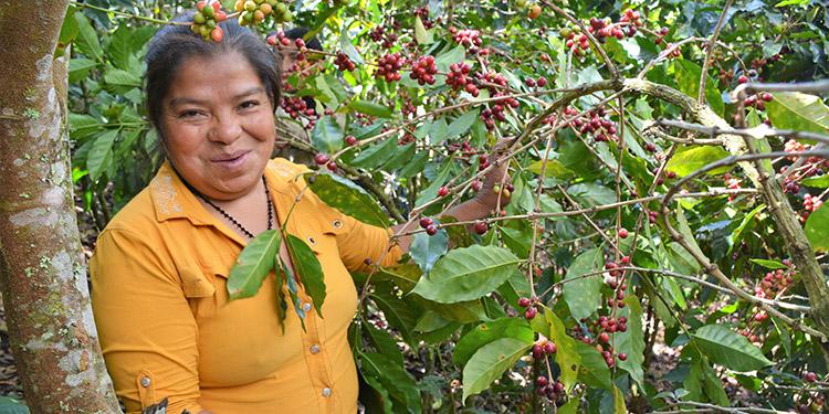 El proyecto ha incorporado a las mujeres en las actividades productivas.