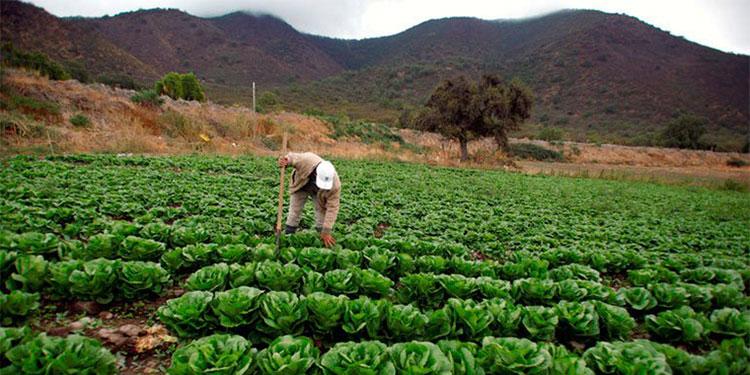Los campesinos esperan aprovechar las lluvias de junio para hacer sus siembras de postrera.
