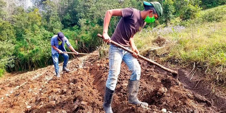 Las autoridades avizoran el paso rápido de una canícula, favoreciendo el tiempo de siembra de los agricultores a nivel nacional.