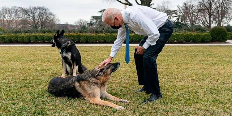 Joe Biden acaricia a su perro pastor Alemán Champ, que murió recientemente.