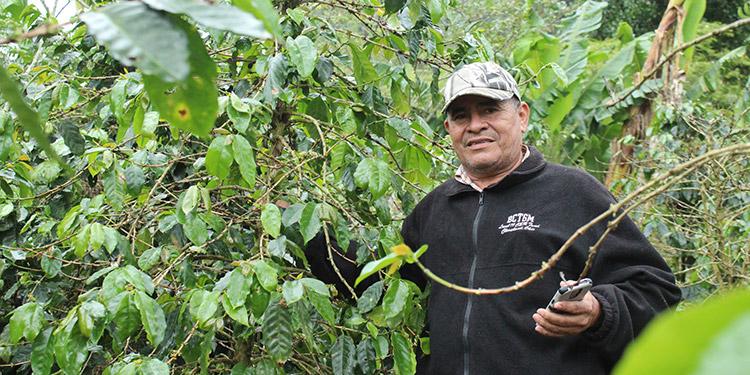En Honduras, el Programa apoyó a cientos de productores de café.