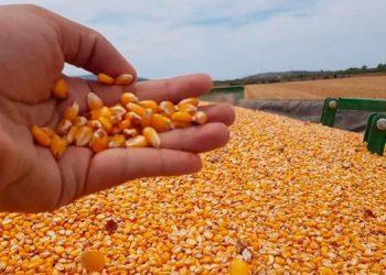 Las importaciones de materias primas y productos intermedios sumaron 900.3 millones de dólares, entre estos, se incluye la compra de granos básicos.