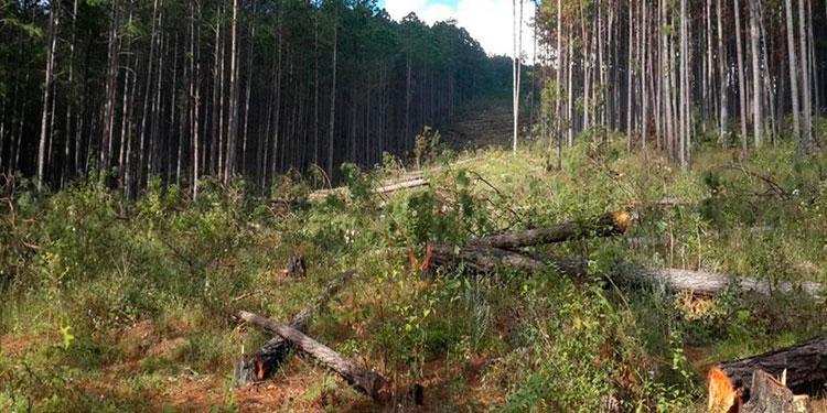 Los descombros forestales agravan la situación en la Reserva de la Biósfera de Río Plátano, una de las áreas con mayor biodiversidad en Centroamérica y uno de los pulmones del planeta.